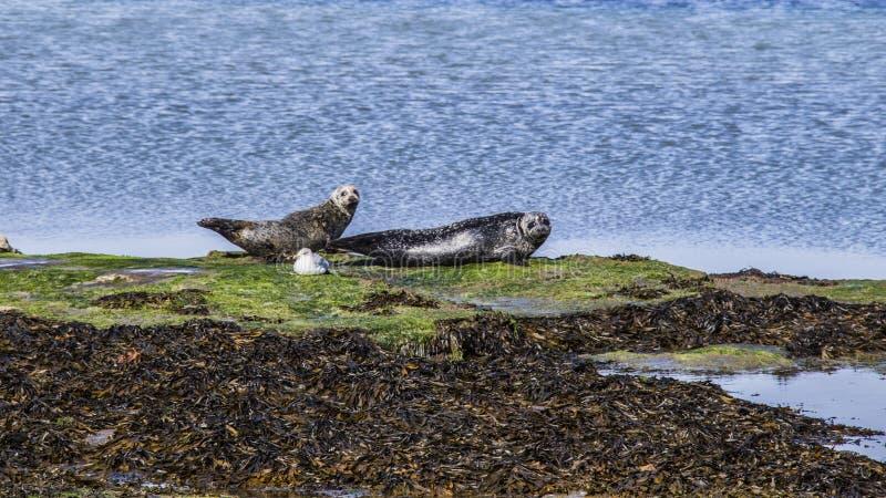 Aran Islands - Inishmore fotografia stock libera da diritti