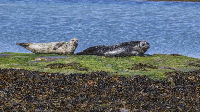 Aran Islands - Inishmore. Ireland, North Atlantic Ocean royalty free stock photos