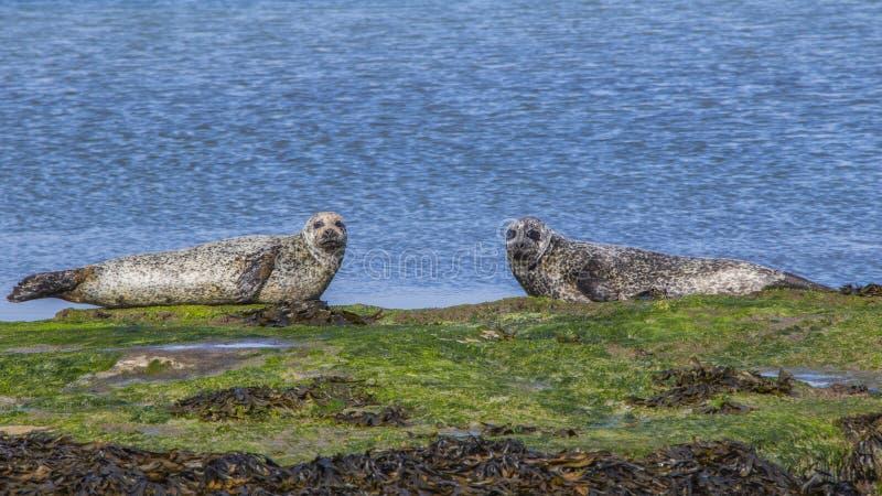 Aran Islands - Inishmore. Ireland, North Atlantic Ocean royalty free stock images