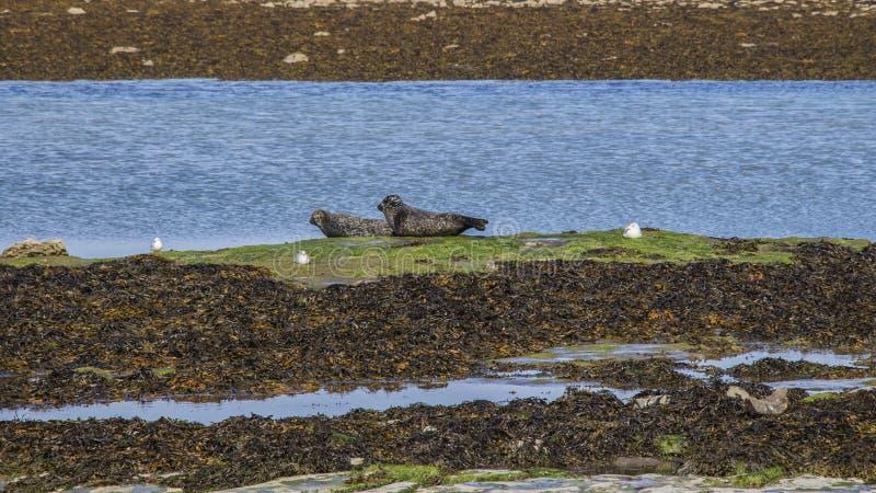 Aran Islands - Inishmore. Ireland, North Atlantic Ocean royalty free stock photo