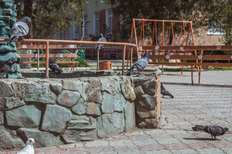 Arancia + acquamarina Uccelli sulla fontana fotografia stock libera da diritti