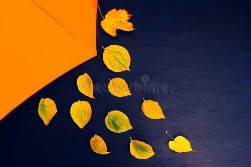 Arancia blu di autunno della tela del fondo delle foglie gialle gialle dell'ombrello fotografia stock libera da diritti