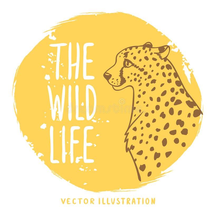 Arancia del ghepardo illustrazione vettoriale