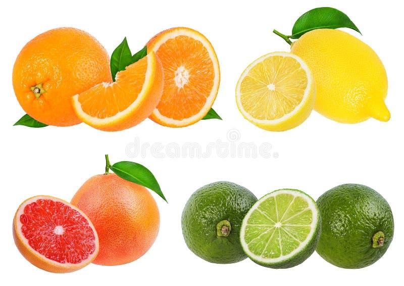 Arancia dell'allegagione dell'agrume, pompelmo, calce, limone isolato immagine stock