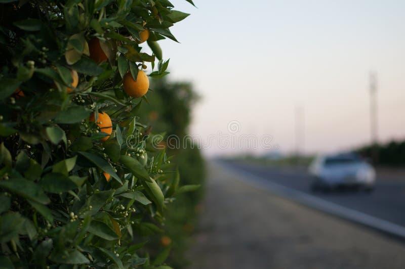 Arancia ed automobile immagini stock
