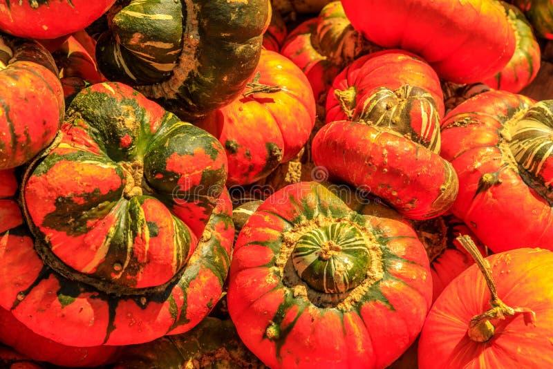 Arancia selvatica e zucche verdi con le gobbe fotografie stock