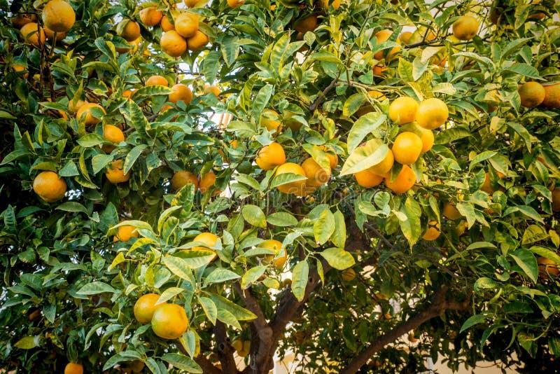 Arancio caricato fotografia stock libera da diritti