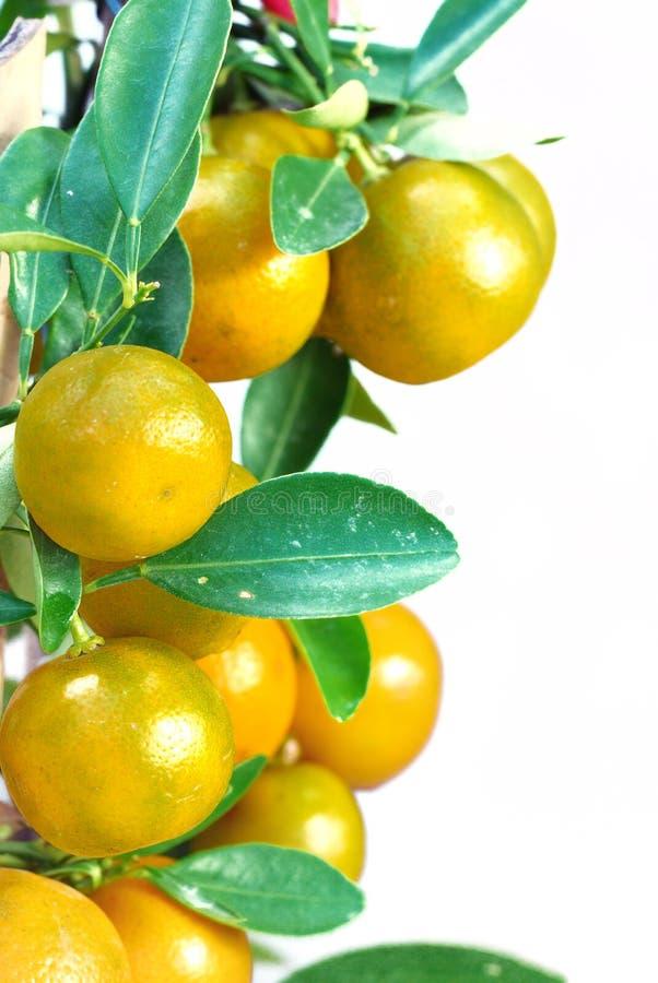 Arancio cinese immagine stock