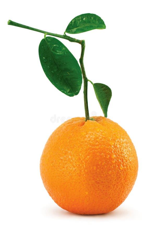 Arancio con i fogli ed i tubuli immagini stock libere da diritti