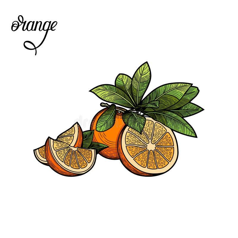 Arancio Illustrazione di vettore royalty illustrazione gratis