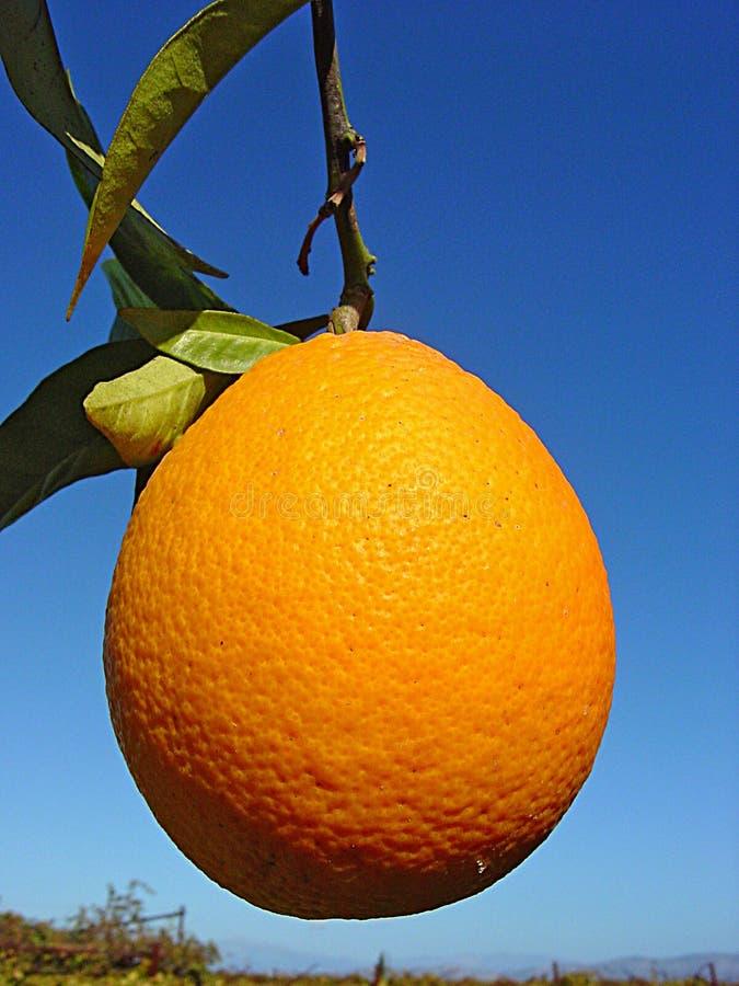 Arancio maturo fotografie stock libere da diritti