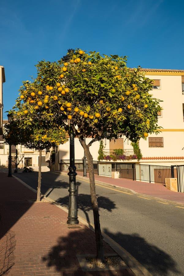 Arancio ornamentale immagini stock libere da diritti