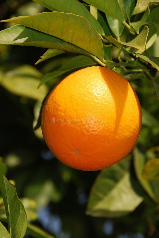 Arancio solare fotografia stock libera da diritti
