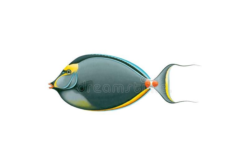 Arancio-spina dorsale Unicornfish (naso lituratus) isolato su fondo bianco illustrazione vettoriale