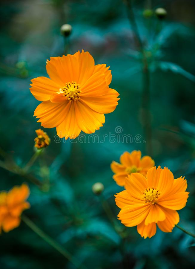 Arancio su verde fotografia stock libera da diritti