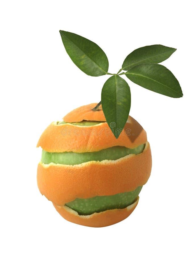 Arancio transgenico immagine stock
