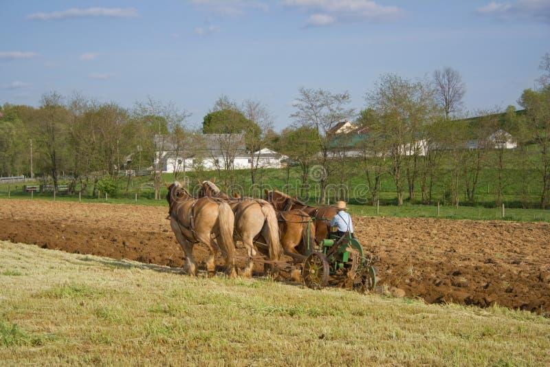 Arando con i cavalli immagine stock libera da diritti