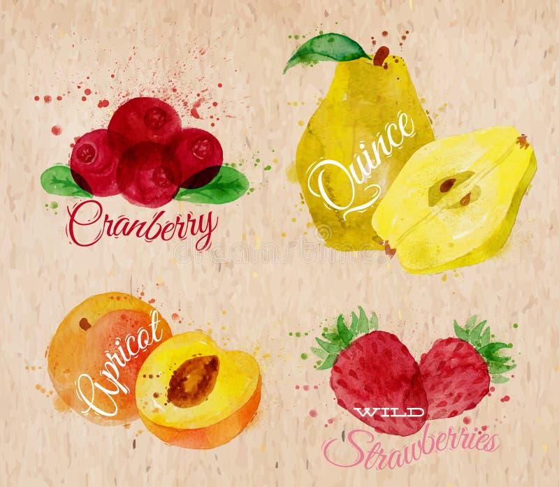 Arando da aquarela do fruto, marmelo, abricó, selvagem ilustração do vetor