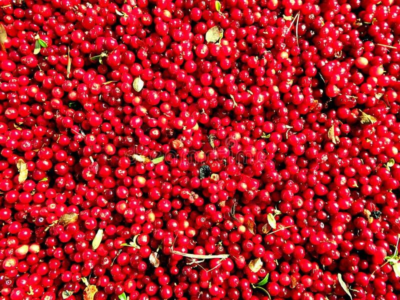 Arando - fundo vermelho imagens de stock royalty free