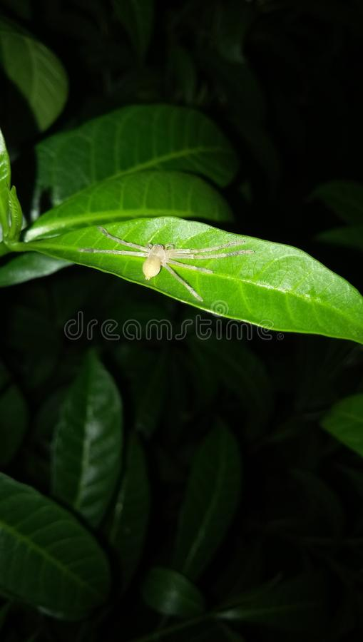 aranha foto de stock royalty free