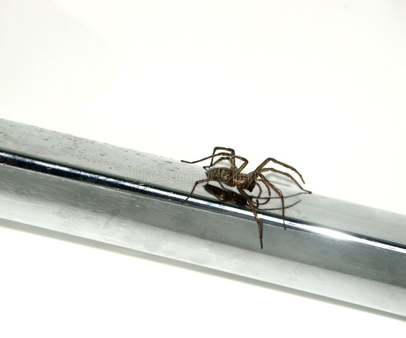 Aranha foto de stock