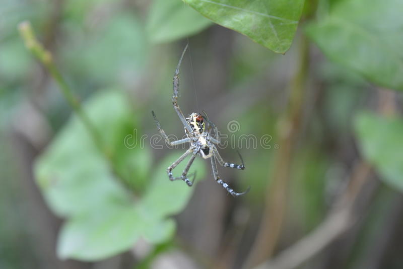 A aranha fotografia de stock