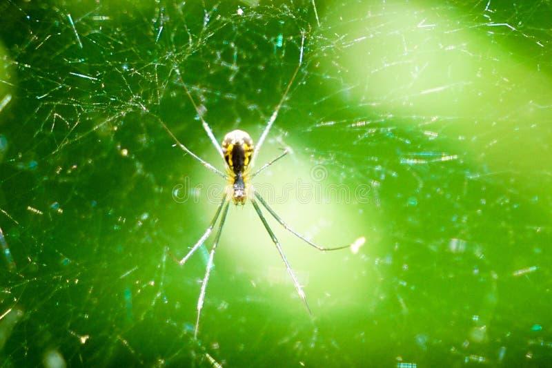 Aranha amarela no Web fotografia de stock
