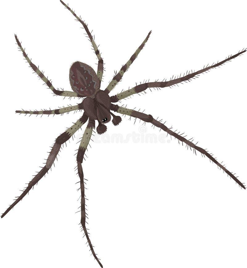 Aranha com pés largos ilustração do vetor
