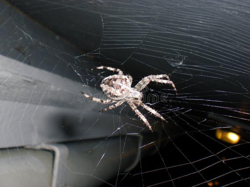 A aranha construiu uma Web imagens de stock