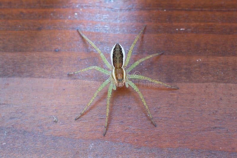 Aranha da jangada em um fundo de madeira foto de stock