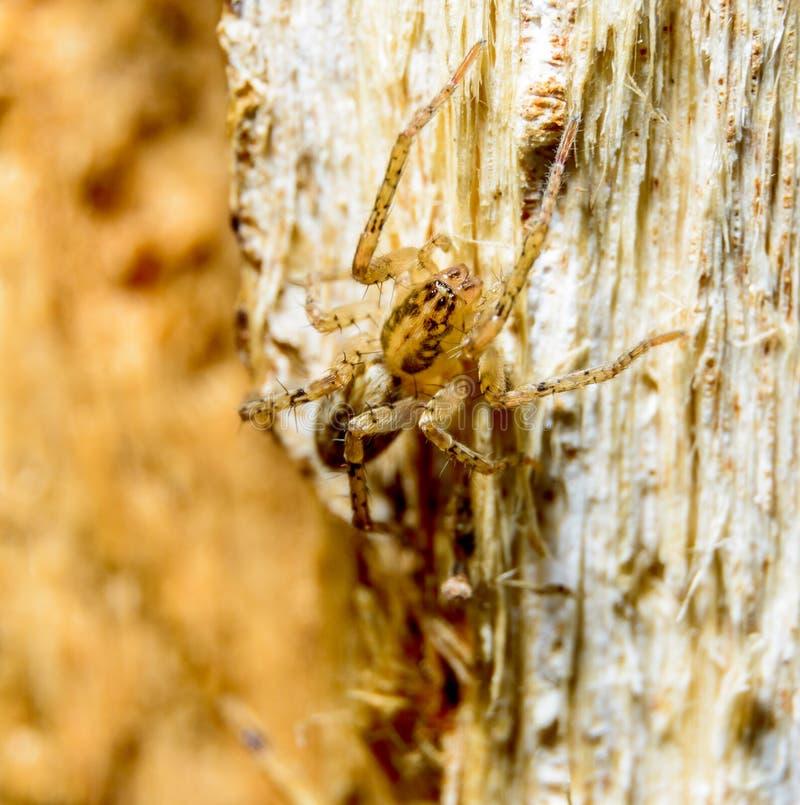 Aranha de Brown na árvore fotografia de stock royalty free