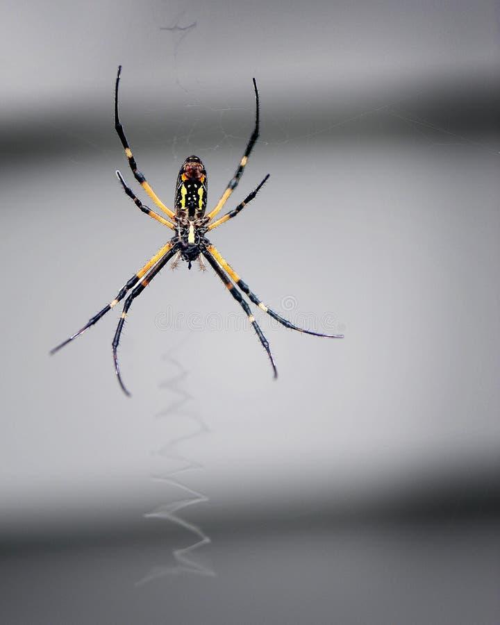 A aranha de jardim gerencie sua Web fotos de stock
