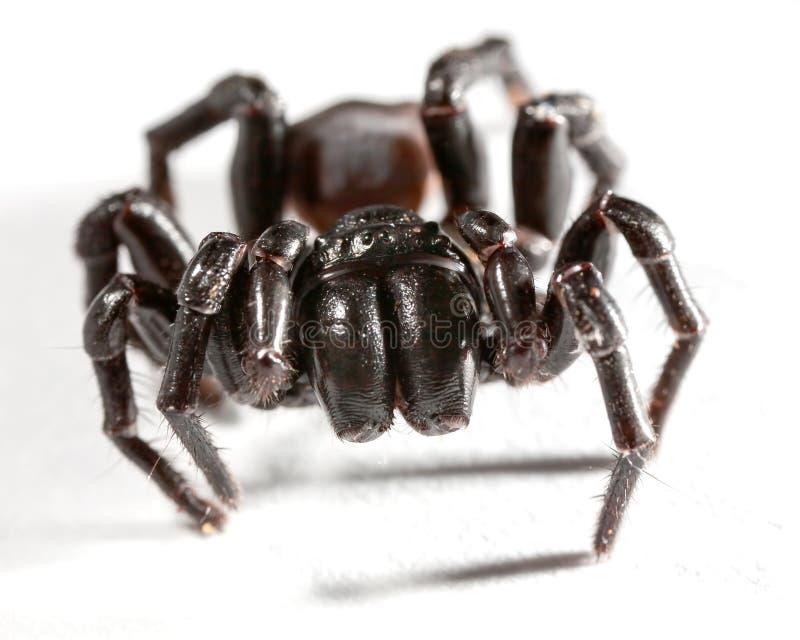 Aranha do fúnil em fôrma de teia de aranha foto de stock royalty free