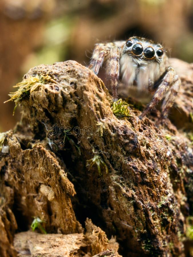 A aranha do rei fotografia de stock