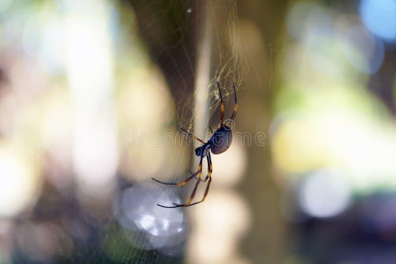 Aranha dourada da esfera na rede da aranha imagem de stock royalty free