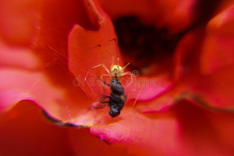 Aranha e no sol do wid imagem de stock