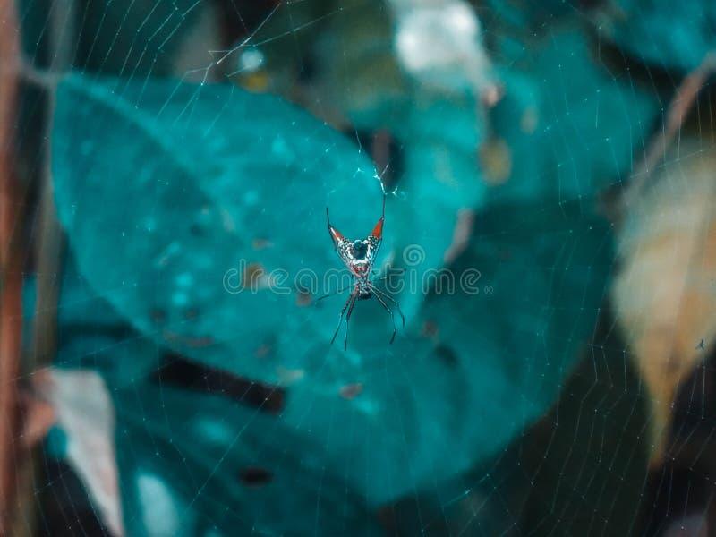 aranha em Manuel Antonio Costa Rica fotografia de stock