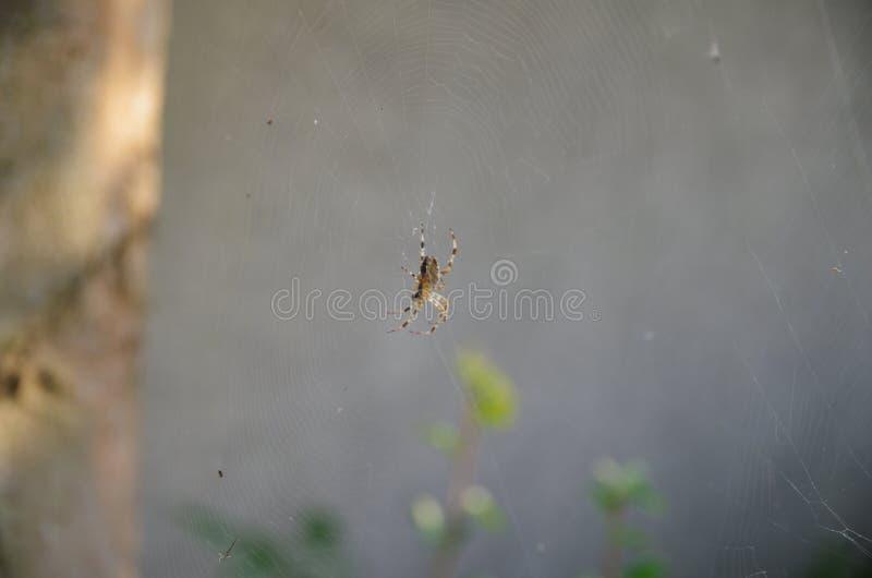 Aranha em net_1 imagem de stock