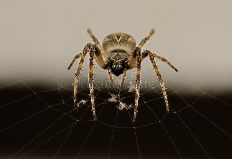 Aranha em seu Web imagens de stock