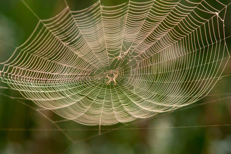 Aranha em um Web imagens de stock