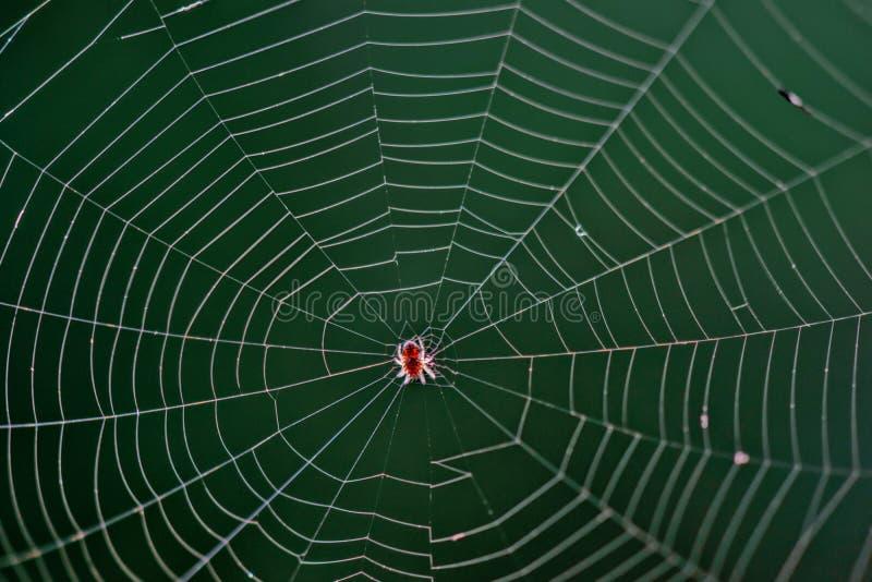 Aranha em uma Web fotos de stock royalty free