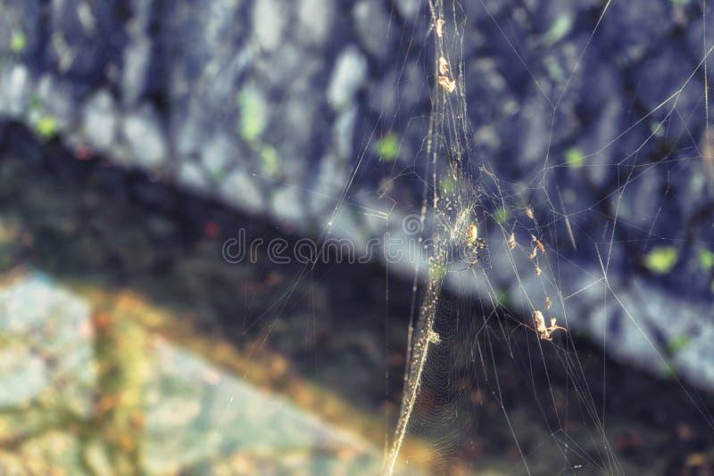 Aranha empoleirada em cima de sua Web intrincada fotografia de stock