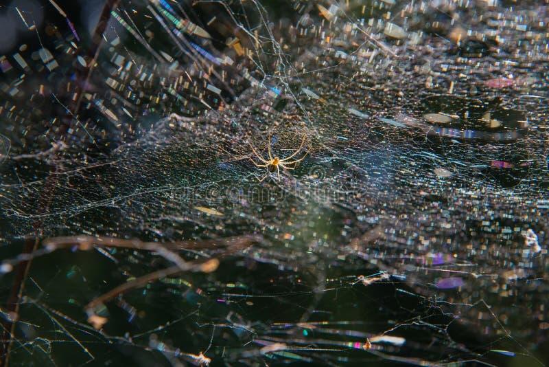 A aranha espera a v?tima fotos de stock royalty free