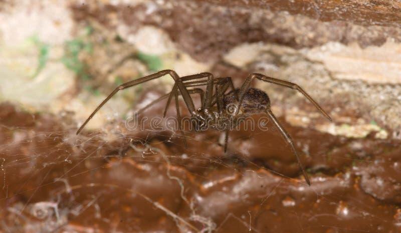 A aranha fica em casa fotografia de stock