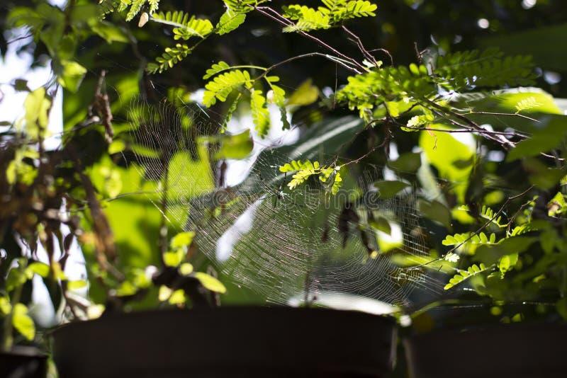A aranha industrioso tinha girado uma Web surpreendente foto de stock royalty free