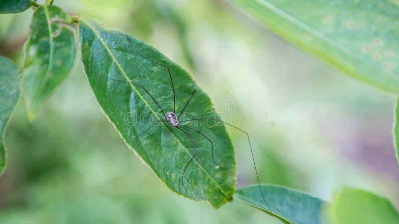 Aranha na montanha em Forest Area nacional foto de stock
