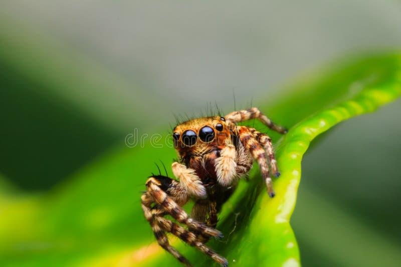 Aranha na natureza imagem de stock