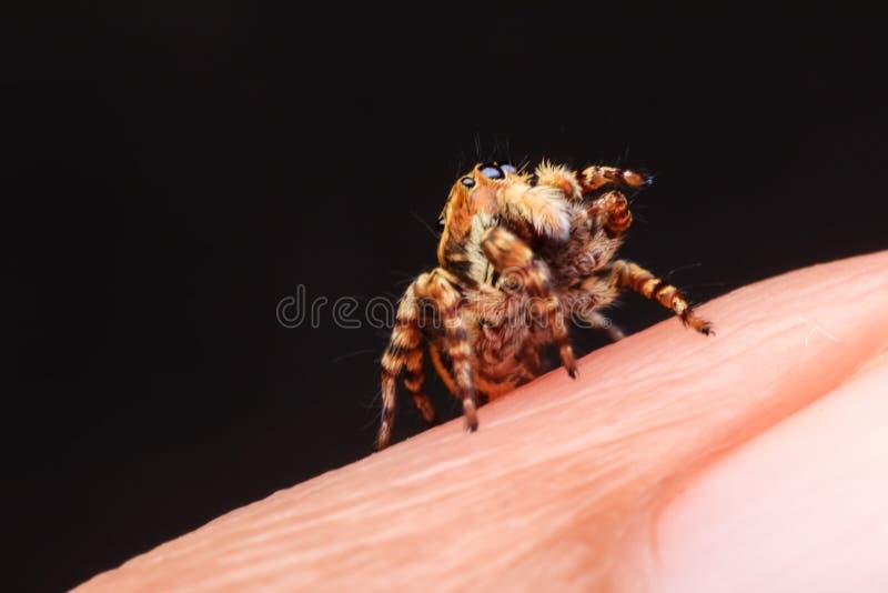 Aranha na natureza foto de stock