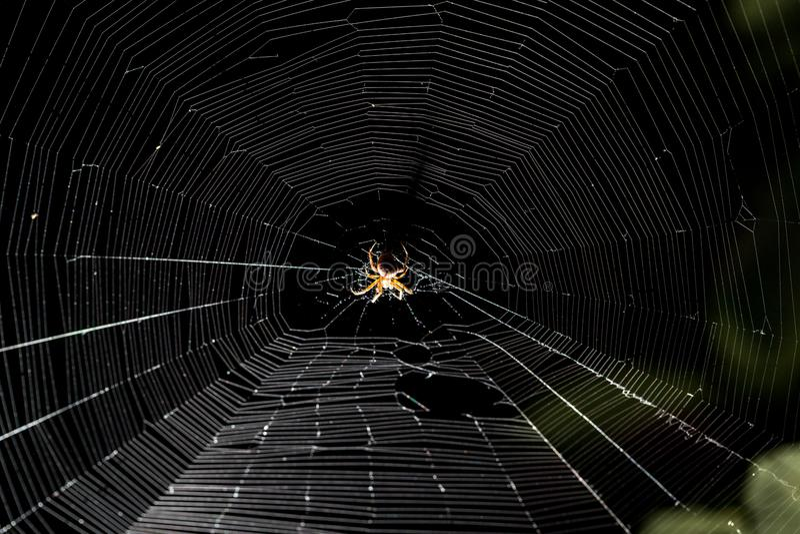 Aranha na Web na noite imagens de stock