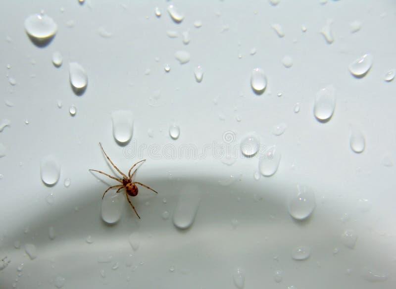 Download Aranha no dissipador! foto de stock. Imagem de arachnid - 544966